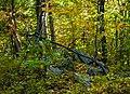 Summit of Stissing Mountain, Pine Plains, NY.jpg