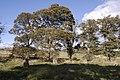 Sunhoney Stone Circle - geograph.org.uk - 1519884.jpg