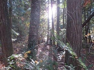 Mara Provincial Park - Sunlight filters through autumn forest at Mara Provincial Park