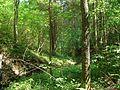 Svente Parish, LV-5473, Latvia - panoramio - alinco fan (3).jpg