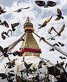 Swyambhu with pigeons.jpg