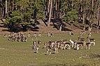 TF Wildpark Johannismuehle 03-14 img01.jpg