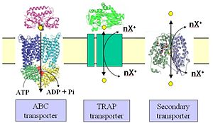 Tripartite ATP-independent periplasmic transporter - A schematic illustrating the key features of a TRAP transporter in comparison to an ABC transporter and a classical secondary transporter.