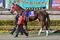 Taisei-Legend February-Stakes 2013.jpg