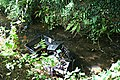 Television in a Stream Bed - geograph.org.uk - 247929.jpg