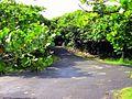 Terranova, Quebradillas, Puerto Rico - panoramio (4).jpg