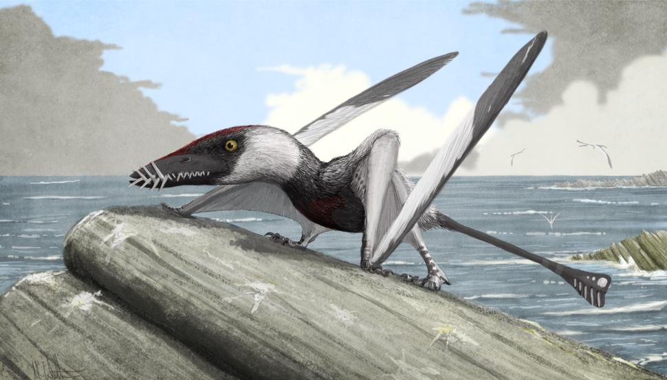Terrestrial Dorygnathus