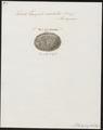 Testudo areolatus - schild - 1700-1880 - Print - Iconographia Zoologica - Special Collections University of Amsterdam - UBA01 IZ11600085.tif