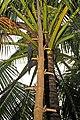 Thailand-3487 - Natural Ladder (3687326438).jpg