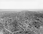 The Battle of Arras, April-may 1917 Q5286.jpg