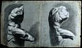 The Belvedere Torso. Black chalk drawing with white highligh Wellcome V0048984.jpg
