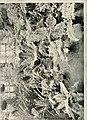The British fern gazette (20229646110).jpg