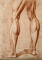 The Muscles of a pair of legs of man standing. Red-chalk dr Wellcome V0007902ER.jpg