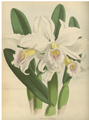 The Orchid Album-01-0011-0002.png