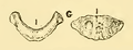 The Osteology of the Reptiles-116 uihguh uhgb.png