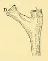 The Osteology of the Reptiles-130 ukjhgbv ioujhkjh oihjuhg kjhb hgvhv jhb iuyhg.png