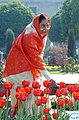 The President, Smt. Pratibha Devisingh Patil with the flower 'Tulips' at Mughal Garden, which is opened for public from 16th February, 2008 for one month at Rashtrapati Bhawan in New Delhi on February 14, 2008.jpg