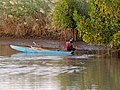 The River Gambia 016 (39668684073).jpg
