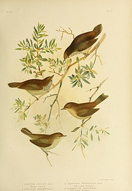The birds of Australia (16804538629).jpg