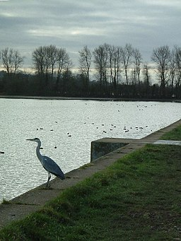 The heron waits at Wilstone - geograph.org.uk - 87568