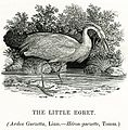 Thomas Bewick The Little Egret 1804.jpg