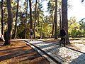 Tivat - gradski park 01.jpg
