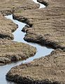 Tomales Bay Marsh.jpg