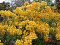 Tongariro National Park-109583.jpg