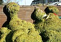 Topiary at Semington, Wiltshire.jpg