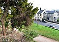 Torquay Road, Oldway mansion gardens, Paignton - geograph.org.uk - 696560.jpg