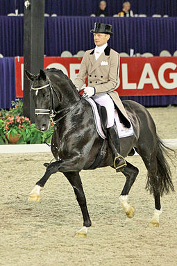 A stallion with a proven competition record is one criterion for being a suitable sire. Totilas.jpg