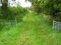 Track Near Nether Locharwoods - geograph.org.uk - 565443.jpg
