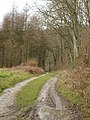 Track by Bull Pit Coppice - geograph.org.uk - 301255.jpg