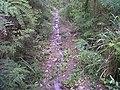 Track road - panoramio.jpg