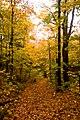 Trail (1539768890).jpg