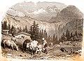 Traite des vaches dans les Alpes.jpg