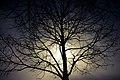 Tree (191887119).jpeg