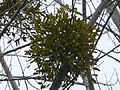 Tree 1240369.jpg