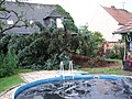 Tree fallen after a storm.jpg