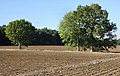 Trees on a field boundary - geograph.org.uk - 1533339.jpg