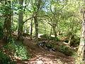 Trevaylor Woods, nr Penzance, Cornwall - geograph.org.uk - 33125.jpg
