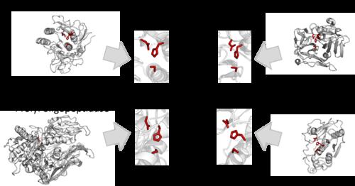 divergent evolution homologous structures