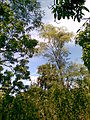 Trincomalee trees scene.jpg