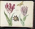 Twee tulpen met schelp, waterjuffer en vlinder Marcus Aurellius Augustus A van der Pul, RP-T-1950-266-39-2.jpg