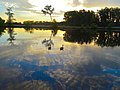 Two Geese in the Warner Park lagoon - panoramio.jpg
