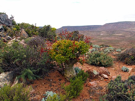 The Richtersveld desert