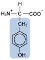 Tyrosine w functional group highlighted.png