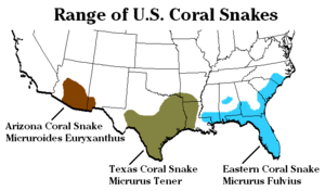 Three species of coral snake are found in the ...