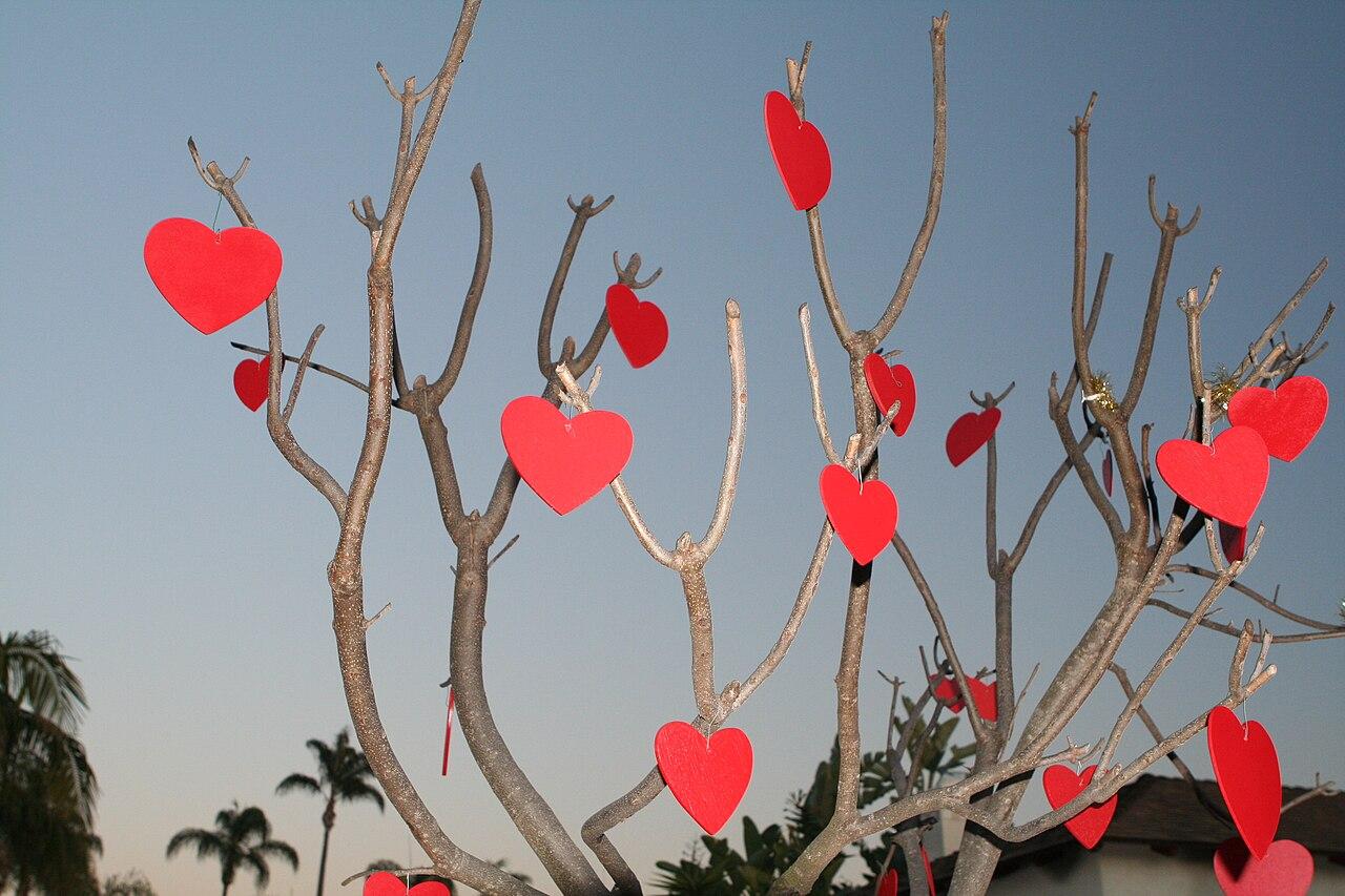 File Valentinesdaytree Jpg Wikimedia Commons