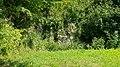 Valkenburg-Groeve aan de Heide (3).jpg